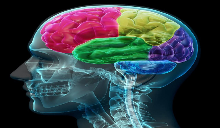 Foods that boost your memory and mental sharpness